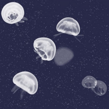 5800011 Jellyfish blue
