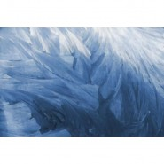 R12281 Feathers