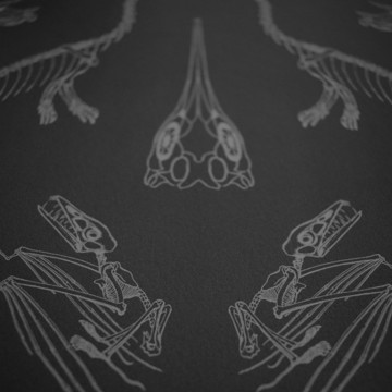 Prehistoria DVS008 Charcoal Balck Grey