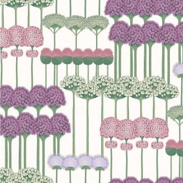Allium 115-12034