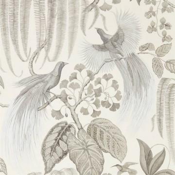 BIRD OF PARADISE DGLW216652