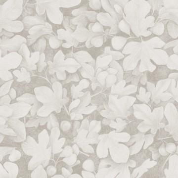 Ficus Snow KEN106