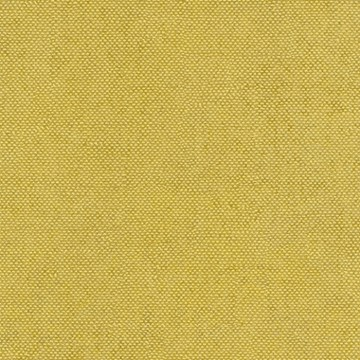 Lys Acacia CLR005