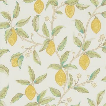 Lemon Tree 216672 Bay Leaf
