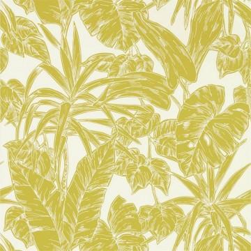 Parlour Palm 112022 Citrus