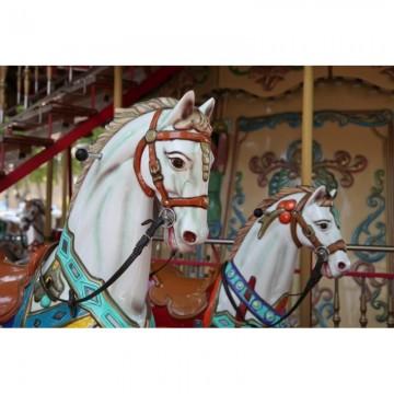 R11881 Carousel