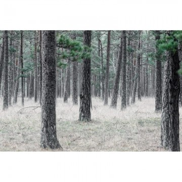 R13711 Pine Forest