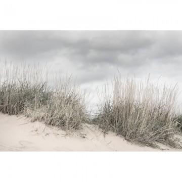 R16341 Pale Shore