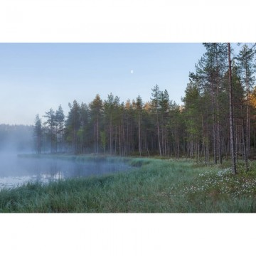 R16421 Forest Lake