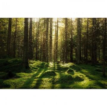 R16641 Forest Bath