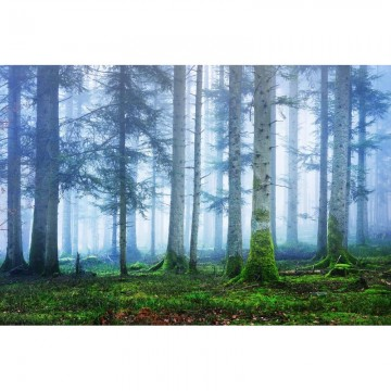 R16661 Blue Forest