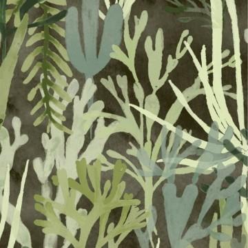 Algues TP303 03