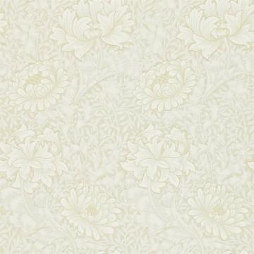 Chrysanthemum DCMW216823
