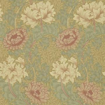 Chrysanthemum DCMW216860