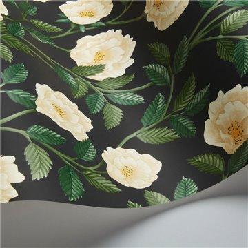 Hampton Roses 118-7016