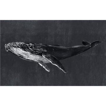 Humpback Whale Night 9500102