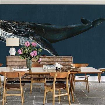 Humpback Whale Ocean 9500100