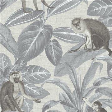 Indian Monkey Dusk Grey DYW0007