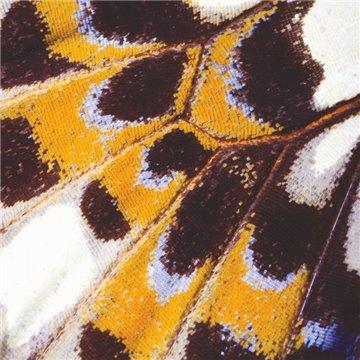 Mariposa L 87333418