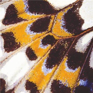 Mariposa M 87323418