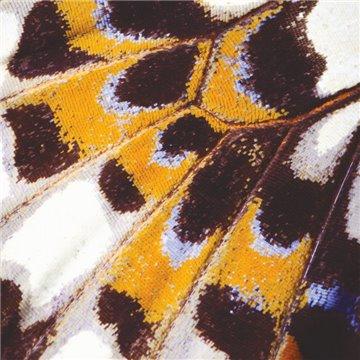 Mariposa S 87313418
