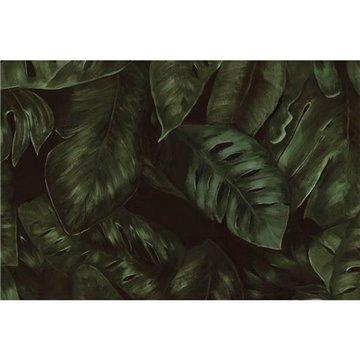 Amazon Fern R17441